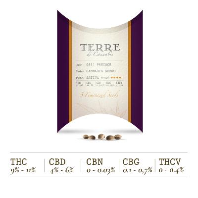 precoce semillas autoflorecientes feminizadas cannabis sativa l